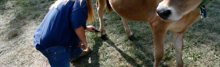 4H-er Painting Hooves