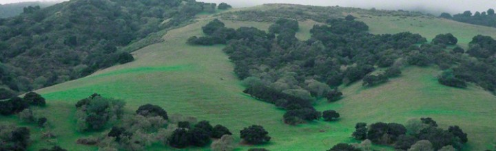 Salinas Valley Green