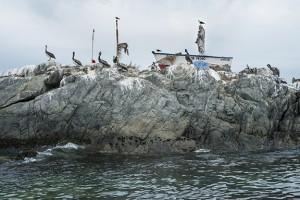 Saint and pelicans protecting fishermen